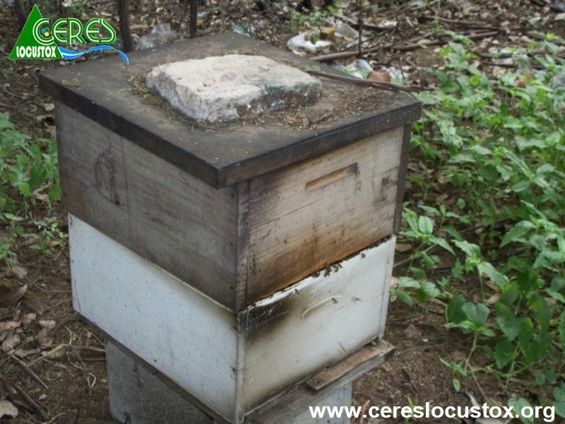 Elevage d'abeilles (Ruche)