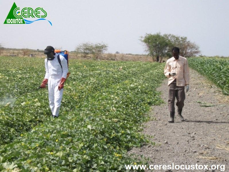 Application chronométrée de pesticides 1
