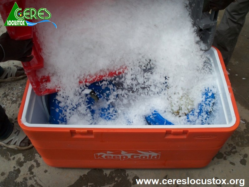 Conditionnement pour transport d'échantillons de melon 3