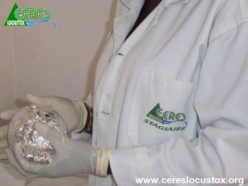 Conditionnement  d'échantillons de melon 6