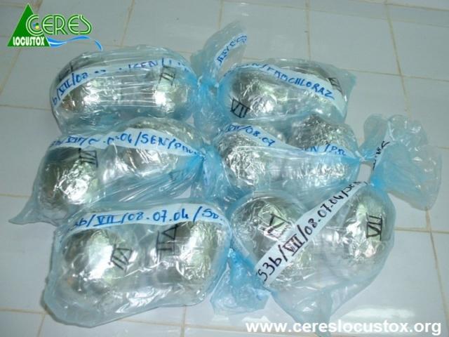 Échantillons de mangues conditionnées